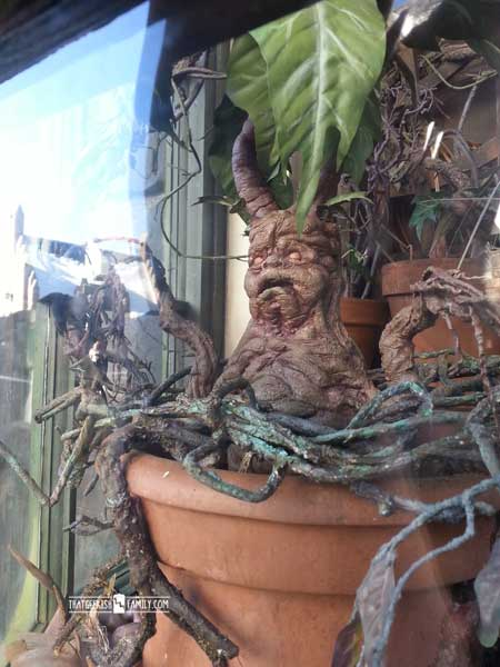 Mandrake - Our first visit to Universal Orlando and Wizarding World of Harry Potter - come check it out for details on vacation planning and having fun!